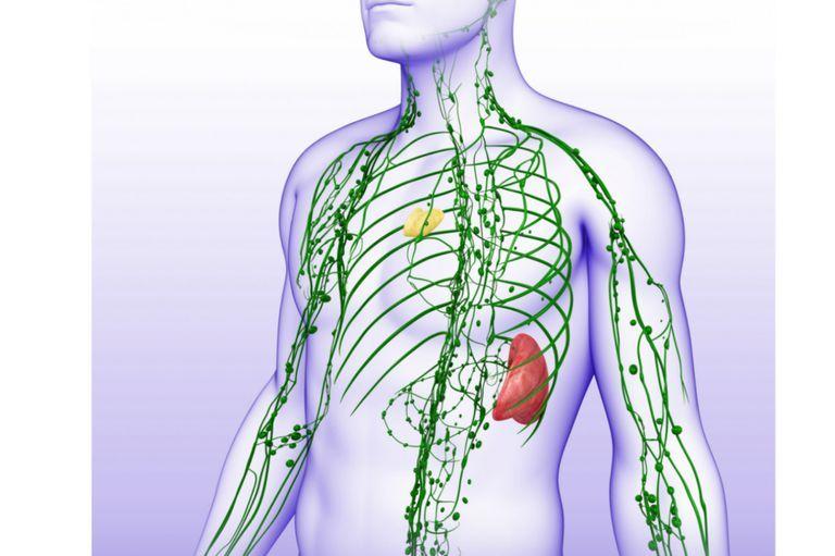 Cum ajuți sistemul limfatic să funcționeze corect ca să poată elimina din organism toxinele și virusurile