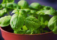 Condimentele care te scapă de poftele alimentare. Le poți cultiva chiar la tine în balcon