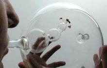 Cum pot detecta albinele cancerul în doar 10 minute. Descoperire uimitoare: Sunt mai abile decât câinii