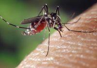 Țânțarii pot transmite virusul meningitei West Nile. Cum ne protejăm de înțepături