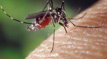 Primul caz de infecție cu virusul West Nile, în România. Mare atenție dacă aveți înțepături de țânțar și aveți aceste simptome