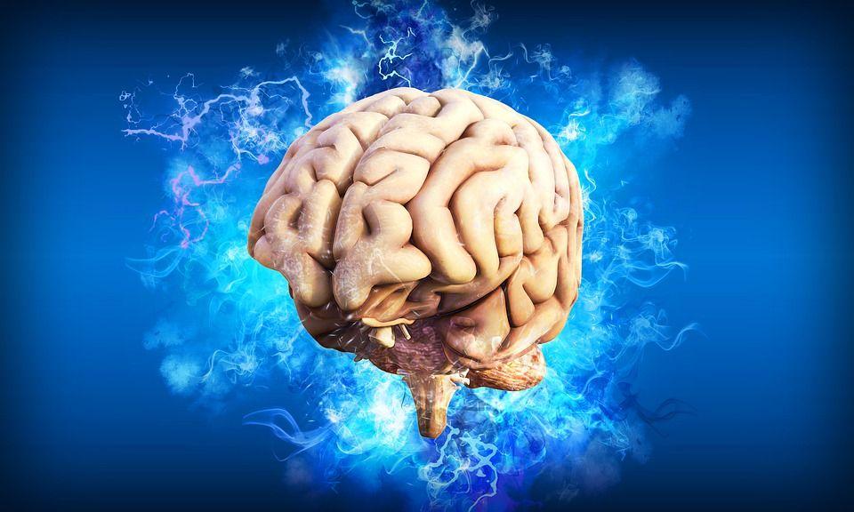 Acest aliment este combustibilul preferat al creierului. Nu îl exclude din dieta zilnică!