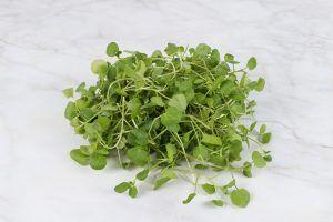 Planta care te ajuta să scapi de infecții virale, tuse și indigestie