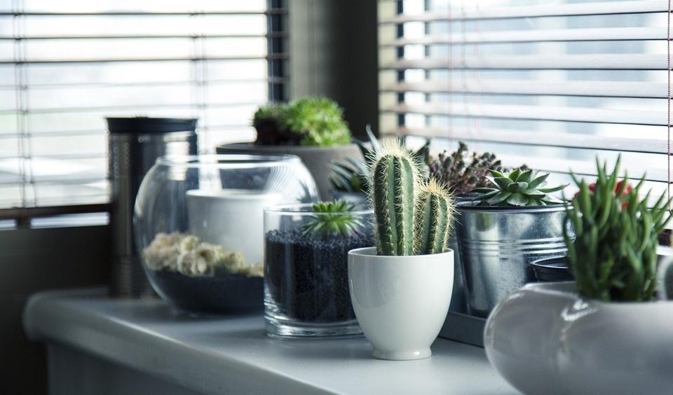 Ing. Costel Vânătoru, expert în horticultură: cele cinci plante care purfică aerul din casă. Absorb gazele nocive și produc oxigen pur
