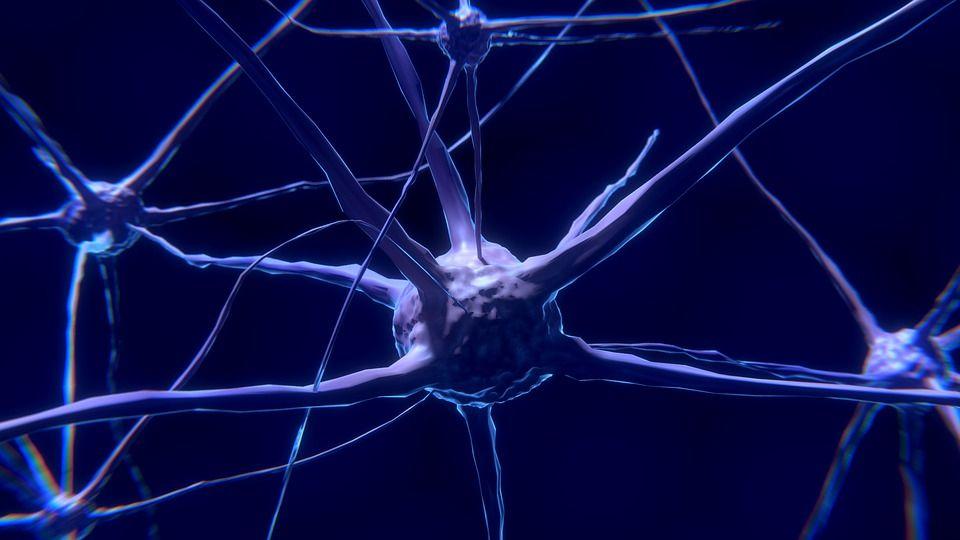Zece alimente care mențin creierul în formă și scad la jumătate riscul de Alzheimer