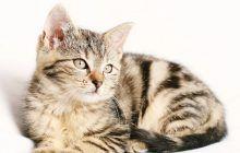 Poți trăi mai mult, dacă te iubește o pisică! Vindecătorul patruped și cum te ajută pisica atunci când ești bolnav