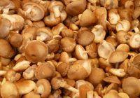 Ciupercile medicinale stimuleaza imunitatea si combat racelile. Iata cele mai cunoscute 4 tipuri