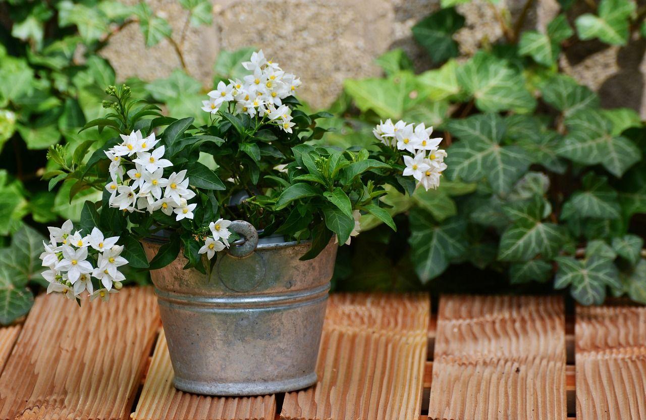 Cea mai bună plantă de ținut în dormitor! Combate depresia, ameliorează anxietatea și atacurile de panică