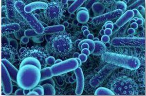 Rolul bacteriilor este vital organismului. Cum le menținem în echilibru perfect ca să ne protejăm de boli