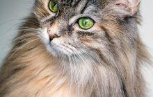 Adevărul din spatele alergiei la părul de pisică sau de câine. Explicațiile unui medic alergolog. Care sunt rasele cele mai puțin alergice