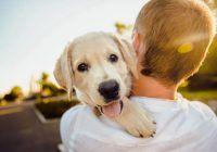 """""""Dog-tor"""" si prieten. Ajutorul nesperat oferit de caine in lupta cu cancerul"""