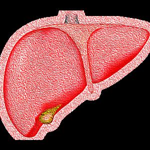 Cele mai evidente simptome ale unui ficat bolnav
