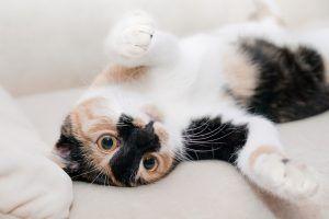 13 lucruri inteligente pe care oamenii le pot învăța de la pisici