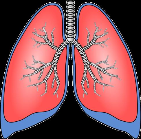Reteta detoxifiere plamani, Site-ul de stiri Nr.1